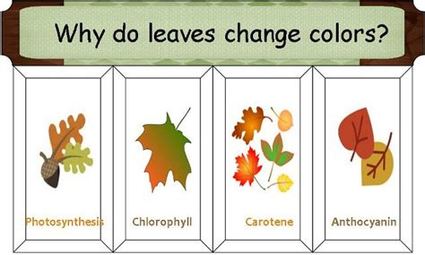 how do leaves change color tina s dynamic homeschool plus