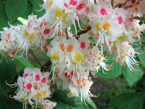 fiore definition fioriamo fiori di bach e oli essenziali purissimi la