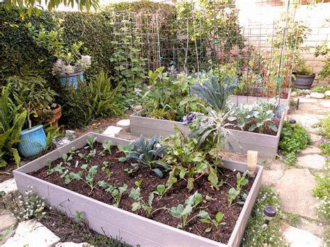growing vegetables in backyard harvest monday and fall planting in my backyard garden