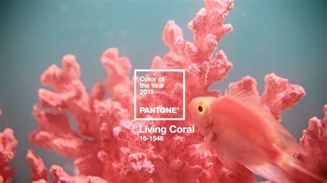 living coral named  pantone color   year garden