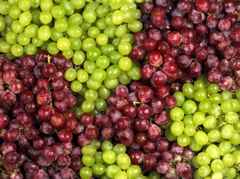 imagenes uvas moradas diferencias entre uva verde y morada cocinadelirante