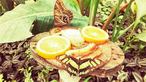 la casa delle farfalle catania la casa delle farfalle a viagrande ct meraviglie della