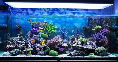 aquarium design san diego fish tank maintenance service san diego 2017 fish tank