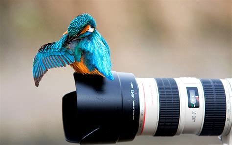 animals nature birds kingfisher canon camera