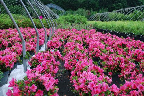 Planters Choice Newtown Ct by Evergreen Shrubs Planters Choice