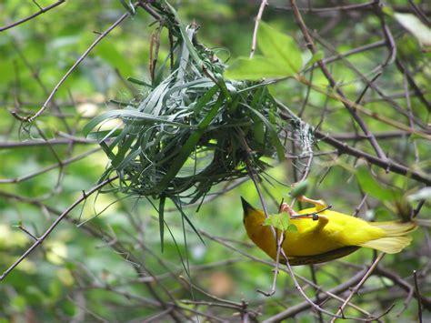 bird making home lamour hudson  blog