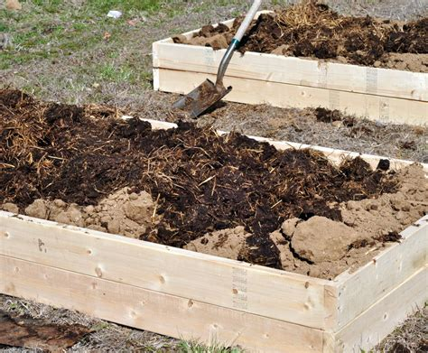 Steer Manure In Vegetable Garden Family Of Farmers Gardening How To Prep Your Soil With