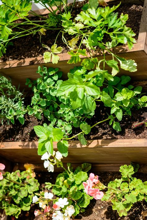 Living Room Herb Garden Diy Tiered Herb Garden Decor And The