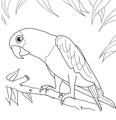 coloring page parrot printable parrot coloring pages coloring me