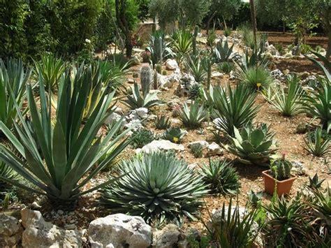 foto giardino roccioso giardini rocciosi cose da indossare