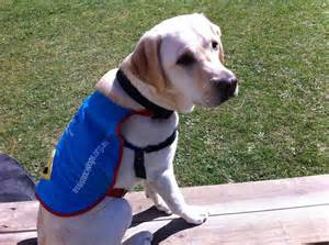 assistance dogs assistance dogs australia logo