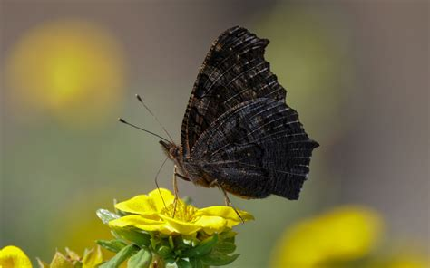 50 Beautiful Butterfly and Bird Wallpapers
