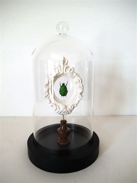 25 best ideas about cabinet of curiosities on
