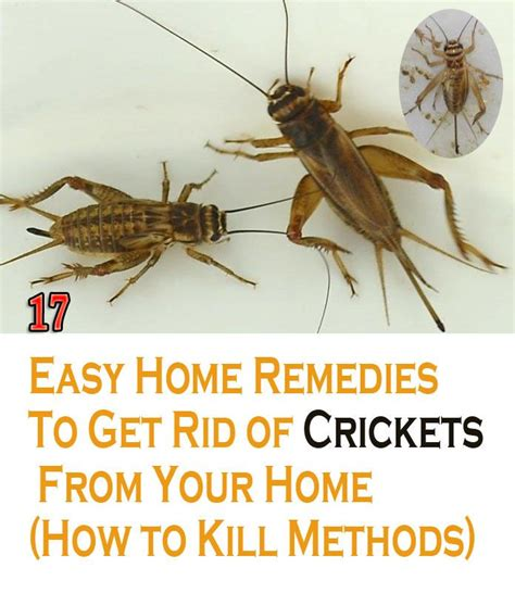 how do you get rid of crickets in your basement 28