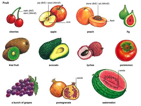 fruit meaning fruit 1 noun definition pictures pronunciation and