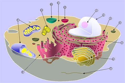Biologi Jilid Ii Neil A Cbell soal soal biologi tentang sel part 2 irenhaniyati s