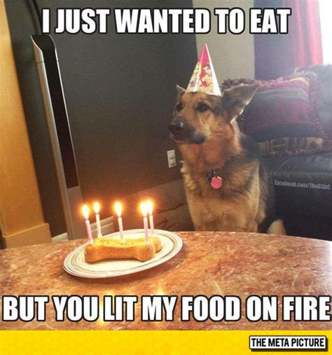 Birthday Cake Dog Meme - german shepherd happy birthday cake dog breeds picture