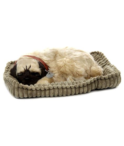 petzzz pug petzzz pug buy petzzz pug at low price snapdeal