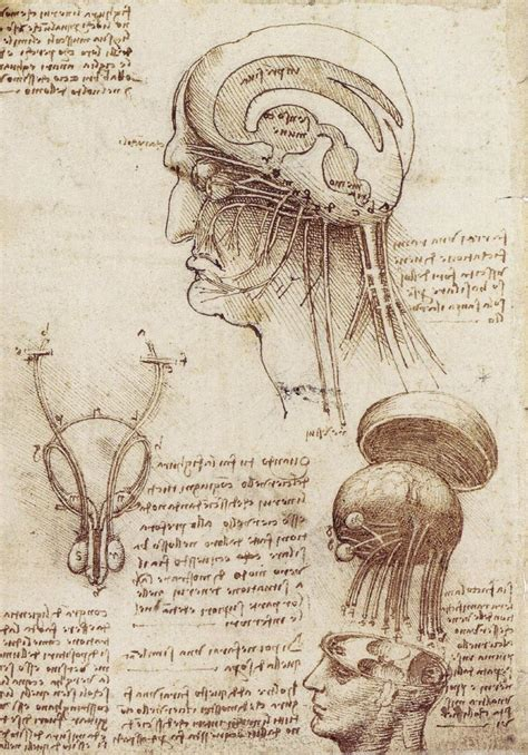 anatomy of a song the history of 45 iconic hits that changed rock r b and pop books the drawings of leonardo da vinci how to draw