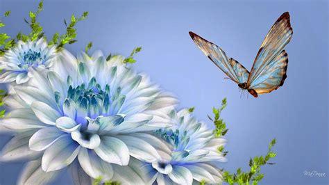 wallpaper kupu kupu cantik terbaru deloiz wallpaper