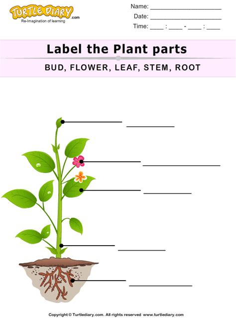 Plant Parts Worksheet by Label The Plant Parts Worksheet Turtle Diary
