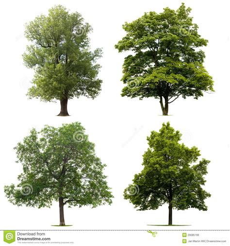 How To Read Architectural Plans by Isolated Trees Royalty Free Stock Image Image 29085166