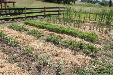 raised row gardening how to grow simple world