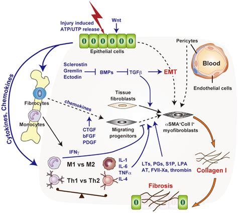 new cellular and molecular mechanisms of lung injury and frontiers cellular and molecular mechanisms of chronic