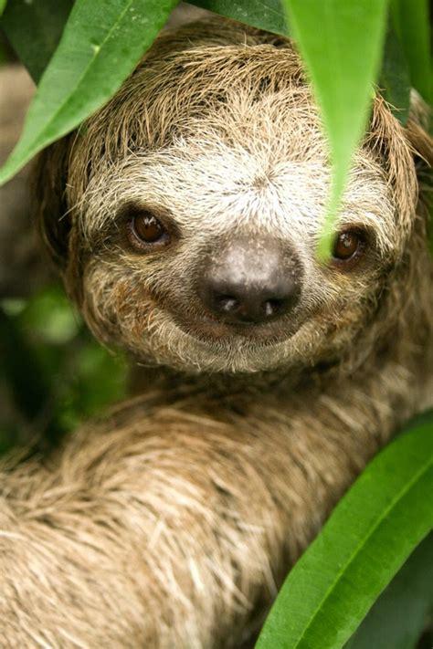 amazon rainforest animals amazon rainforest animals may 2014