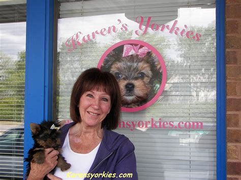 teacup yorkies for sale in ky teacup yorkies for sale near louisville ky breeds picture