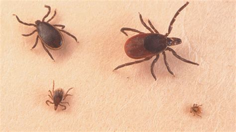 tick lyme disease how to protect yourself from surge in lyme disease ticks nbc4 washington