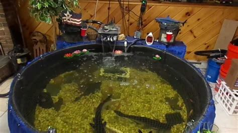 Indoor Pond by 300 Gallon Iridescent Shark Pond 125 Cichilid Tank 250