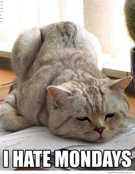 Monday Cat Meme - i hate mondays weknowmemes