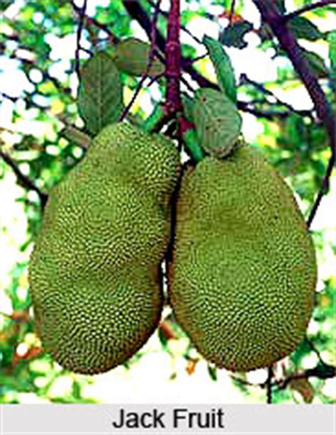 fruit trees names fruit tree indian trees