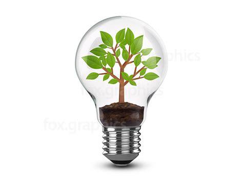 tree  light bulb png fox graphics