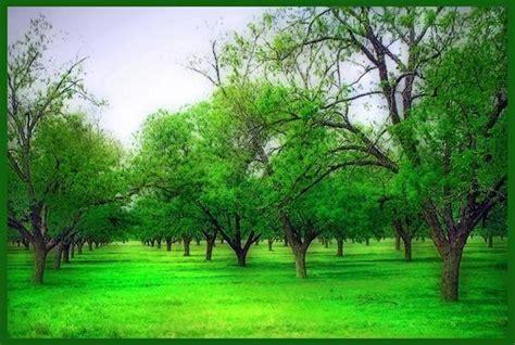 Green Garden by Home Decorating Green Garden