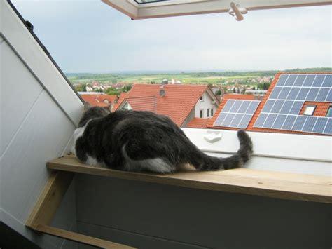 Fensterbrett Dachfenster by Aussichtsplattform F 252 R Katzen Gebaut