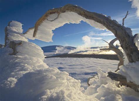 Winter Yellow yellowstone national park winter in yellowstone