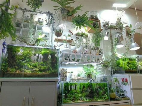 best 25 fish tank terrarium ideas on plant