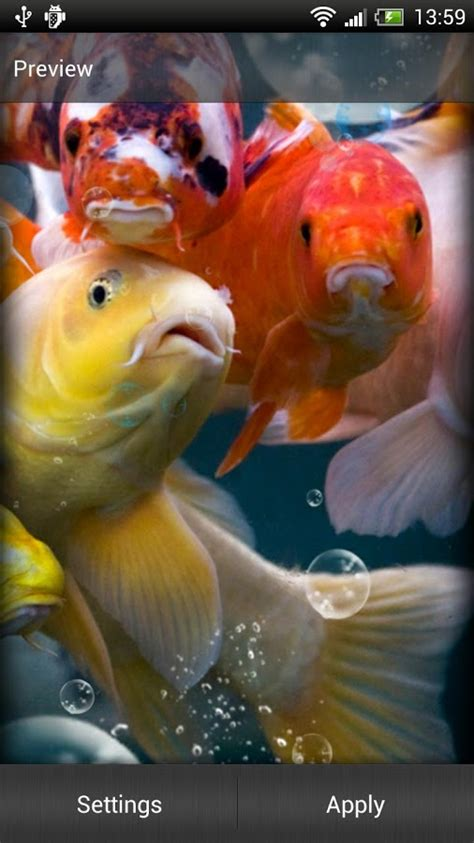 full version of koi live wallpaper koi live wallpaper for pc wallpapersafari
