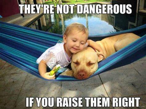 Serious Dog Meme - vicious dog quotes quotesgram