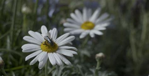 black mirror killer bees remember that black mirror episode on killer drone bees