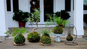 Garden Answer Garden How To Make Kokedama Version Garden Answer