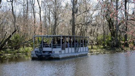 sw boat tours baton rouge louisiana alligators in the wild at the farm and on the