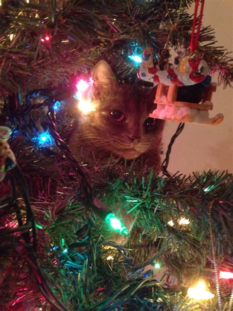 cat first seen christmas tree cats vs trees you can not miss these pictures