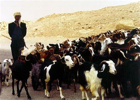 how to a herding herding