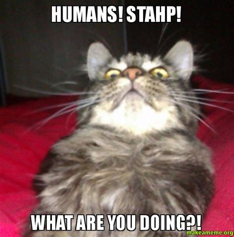 What You Doing Meme - humans stahp what are you doing this cat has seen