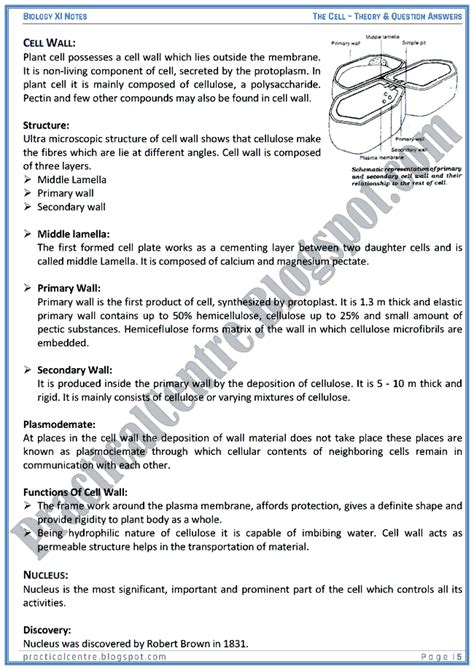 Essay Questions In Anatomy by The Ultimate Plant Anatomy Essay Questions Secret