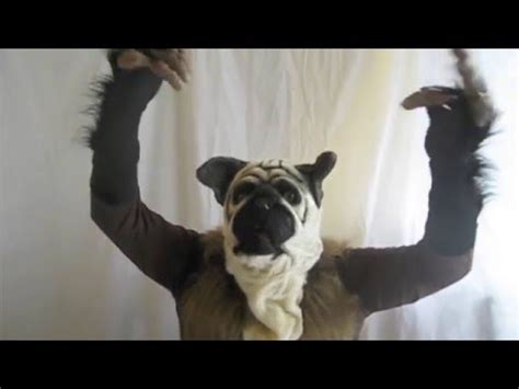 puppy monkey baby costume how to make puppy monkey baby costume bowl commercial