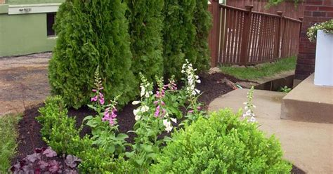 backyard shrubs privacy backyard privacy ideas landscaping shrubs shrub and